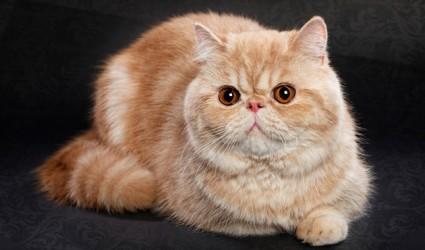 12 Kucing Paling Cantik Di Dunia Bagaes Journal